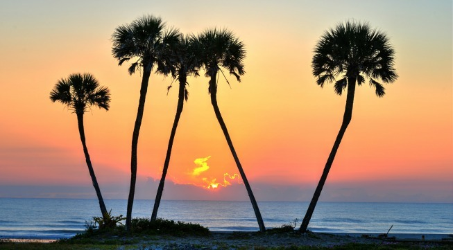 Palm_trees_at_sunset