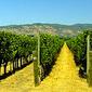Thumb_wines