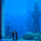 Thumb_hotelaquariums_atlantisthepalm_470x149