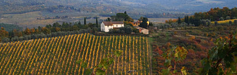 Choose from10 worldwide wine regions that offer superlative sipping and scenery alike